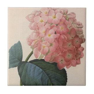 Carreau Fleurs vintages de jardin, Hortensia rose