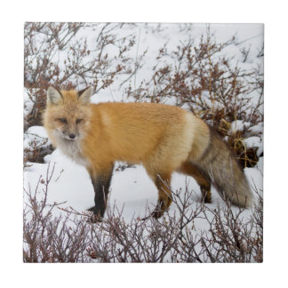 Carreau Fox rouge dans la neige en hiver