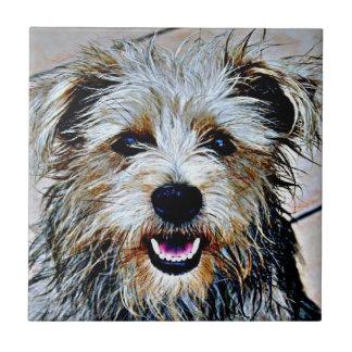 Carreau Gorge d'art de bruit d'Imaal Terrier
