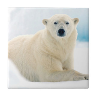 Carreau Grand verrat adulte d'ours blanc sur la glace