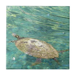 Carreau grande natation de tortue de rivière