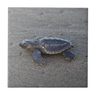 Carreau Hatchlings de tortue
