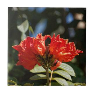 Carreau iFlowers d'un tuliptree africain