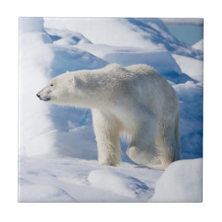 Carreau Jeune ours blanc masculin