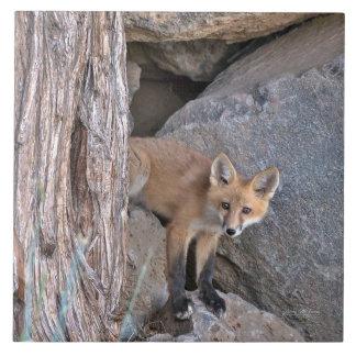 Carreau Kit de Fox rouge
