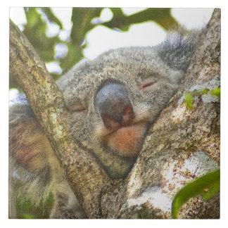 Carreau Koala faisant une sieste