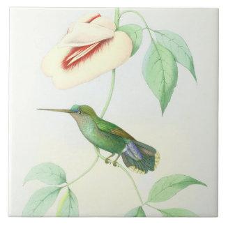 Carreau La faune d'oiseaux de colibri fleurit les animaux