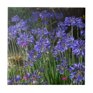 Carreau L'Agapanthus bleu fleurit la tuile