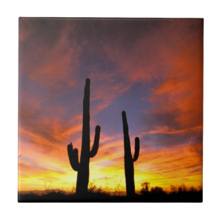 Carreau L'Amérique du Nord, Etats-Unis, Arizona, désert de