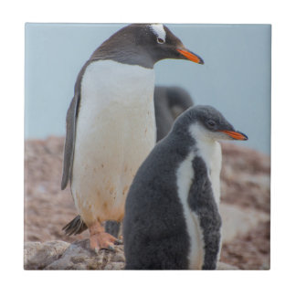 Carreau L'Antarctique. Port de Neko. Pingouin 3 de Gentoo