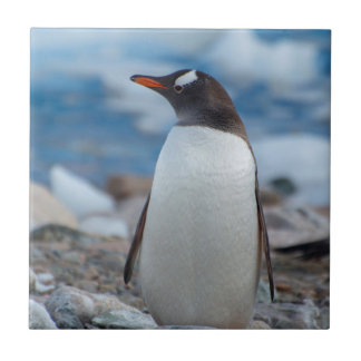Carreau L'Antarctique. Port de Neko. Pingouin de Gentoo
