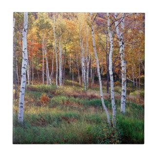 Carreau Le Maine, parc national d'Acadia, automne