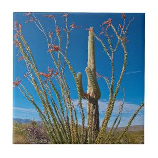Carreau Les Etats-Unis, Arizona. Cactus en parc national