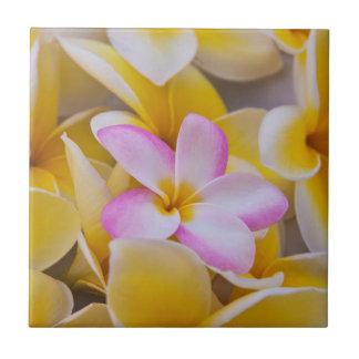 Carreau Les Etats-Unis, Hawaï, Oahu, Plumeria fleurissent