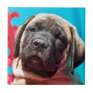 Carreau Les Etats-Unis, la Californie. Chiot de mastiff