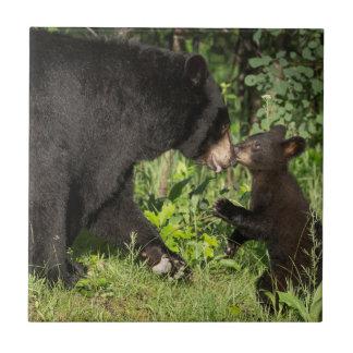 Carreau Les Etats-Unis, Minnesota, grès, faune 13 du