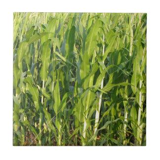 Carreau Les plantes de maïs vert se développent en été