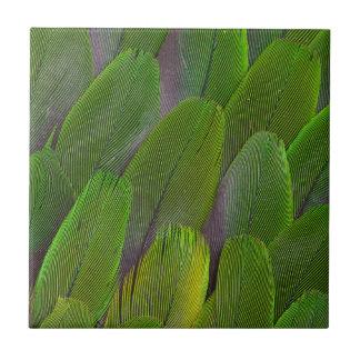 Carreau Les plumes vertes de perroquet se ferment