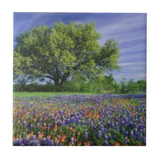 Carreau Live Oak et pinceau du Texas, et le Texas