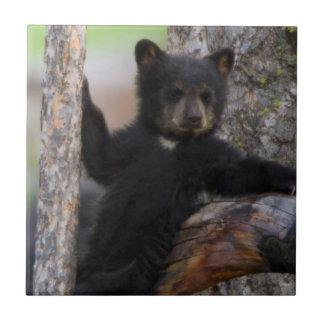 Carreau Lounging de CUB d'ours noirs