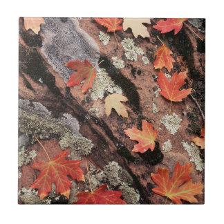 Carreau L'Utah, parc national de Zion, motifs d'automne