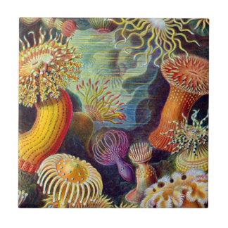 Carreau Marine d'actinies d'Ernst Haeckel : Actiniae