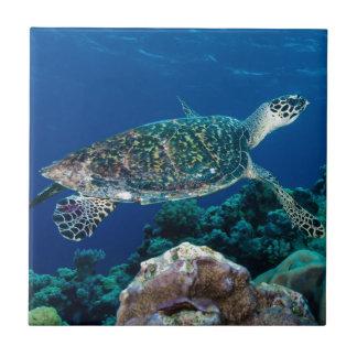 Carreau Mer de corail de la Grande barrière de corail de