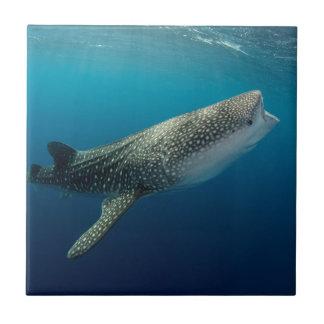 Carreau Natation de requin de baleine