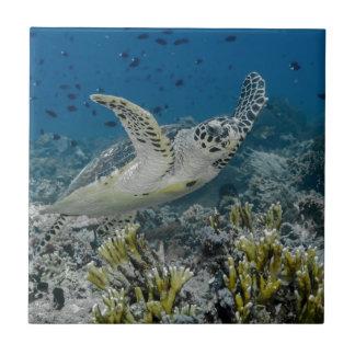 Carreau Natation de tortue de mer de Hawksbill