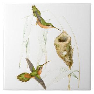 Carreau Nid d'animaux de faune d'oiseaux de colibri