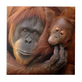 Carreau Orang-outan de mère et de bébé