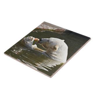 Carreau Ours blanc mangeant du fruit dans l'eau