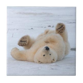 Carreau ours blanc, maritimus d'Ursus, petit animal