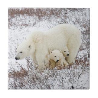 Carreau Ours blancs femelles et deux petits animaux