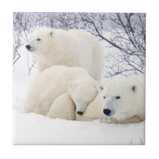 Carreau Ours blancs femelles et deux petits animaux 3