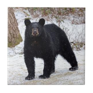 Carreau Ours noir de la Pennsylvanie en hiver