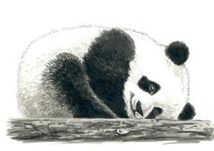 Carreaux Dessin Panda En Céramique Zazzlefr