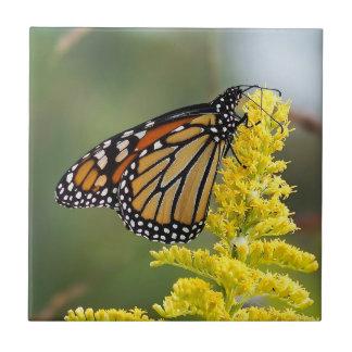 Carreau Papillon de monarque sur la tuile en céramique