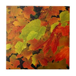 Carreau Parc d'état d'Itasca, couleurs d'automne