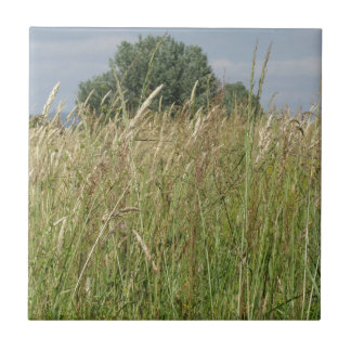 Carreau Paysage d'été de champ sauvage. La Toscane, Italie