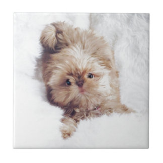 Carreau Penny le foie orange Shih Tzu sur le nuage 9