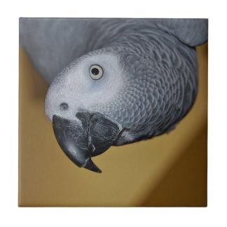 Carreau Perroquet de gris africain du Congo bonjour