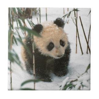 Carreau Petit animal de panda sur la neige, Wolong,