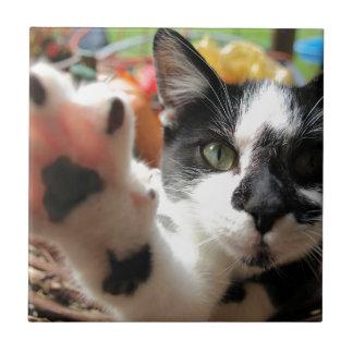 """Carreau Petite tuile carrée de """"haut chat de cinq"""" Kitty"""
