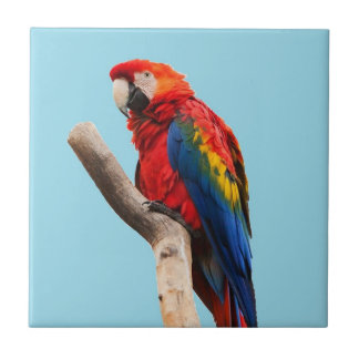 Carreau Photo colorée de portrait de perroquet