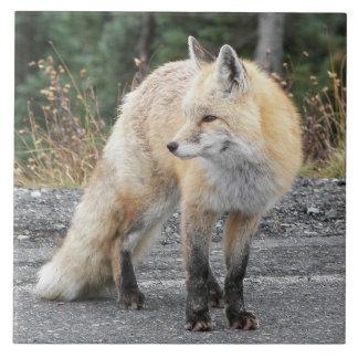 Carreau Photo de Fox rouge de cascade