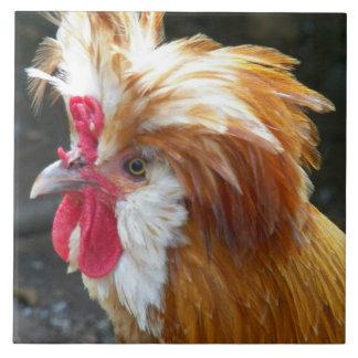 Carreau Photo polonaise de poulet
