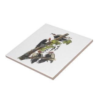 Carreau Pivert de Pileated par Audubon