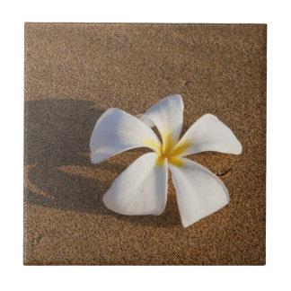 Carreau Plumeria sur la plage sablonneuse, Maui, Hawaï,