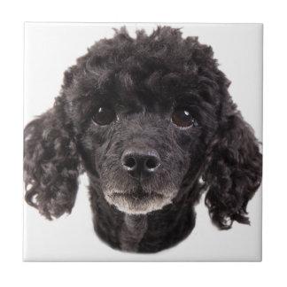 Carreau Portrait d'un caniche noir